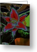 Lilies Flowers Greeting Cards - Astral Lady Greeting Card by Jan Amiss Photography