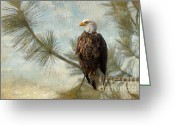 Bald Eagle Digital Art Greeting Cards - At Peace Greeting Card by Reflective Moments  Photography and Digital Art Images