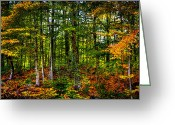 Fall Colors Greeting Cards - At the Base of McCauley Mountain Greeting Card by David Patterson