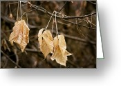 Brown Leaves Greeting Cards - At The End We Rest Greeting Card by James Steele