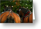 Carriage Team Greeting Cards - At The Ready Greeting Card by Nan Schefcick