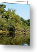 Flooding Greeting Cards - Atchafalaya Basin 7 Greeting Card by Maggy Marsh