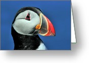 Puppet Greeting Cards - Atlantic Puffin Greeting Card by Tony Beck