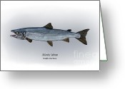 Atlantic Drawings Greeting Cards - Atlantic Salmon Greeting Card by Ralph Martens