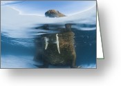 Walruses Greeting Cards - Atlantic Walrus Bull Resting On A Piece Greeting Card by Paul Nicklen