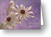Texture Flower Photo Greeting Cards - Attachement - s09at01b2 Greeting Card by Variance Collections