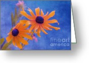 Texture Flower Photo Greeting Cards - Attachement - s11at01d Greeting Card by Variance Collections