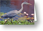 Blue Heron Photo Greeting Cards - Attentive Stance Greeting Card by Fraida Gutovich