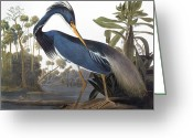 Tricolor Greeting Cards - Audubon: Heron, 1827 Greeting Card by Granger
