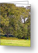 Audubon Greeting Cards - Audubon Park 2 Greeting Card by Steve Harrington