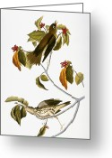 Artcom Greeting Cards - Audubon: Thrush Greeting Card by Granger