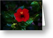 S. California Greeting Cards - August Splendor Greeting Card by Helen Carson