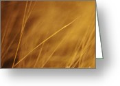 Abstract Impressionism Photo Greeting Cards - Aurum Greeting Card by Priska Wettstein