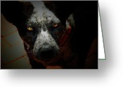 Dog Portrait Digital Art Greeting Cards - Australian Cattle Dog Greeting Card by Steven  Digman