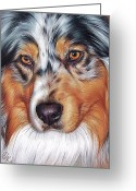Australian Animal Greeting Cards - Australian Shepherd Greeting Card by Yelena Kolotusha