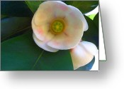 Signature Photo Greeting Cards - Autograph Tree Blossom Greeting Card by James Temple