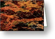 Rudi Prott Greeting Cards - Autumn 1 Greeting Card by Rudi Prott