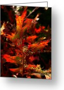 Backlit Greeting Cards - Autumn 6 Greeting Card by Jeff Breiman
