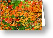 Colorful Photography Mixed Media Greeting Cards - Autumn Abstract Painterly Greeting Card by Andee Photography