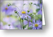 Aster  Photo Greeting Cards - Autumn Asters Greeting Card by Jacky Parker