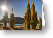 Lake Tekapo Greeting Cards - Autumn at Lake Tekapo Greeting Card by Andreas Hartmann