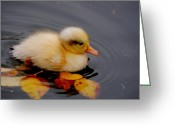 Duckling Greeting Cards - Autumn Baby Greeting Card by Photodream Art