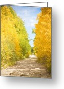 Fall Photographs Greeting Cards - Autumn Back County Road Greeting Card by James Bo Insogna
