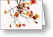 Photos Of Autumn Greeting Cards - Autumn Greeting Card by Benny  Woodoo