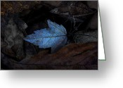 Forest Floor Photo Greeting Cards - Autumn Blue Greeting Card by Ron Jones