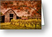 Mountain Vineyards Greeting Cards - Autumn Cabernet Greeting Card by Debra and Dave Vanderlaan
