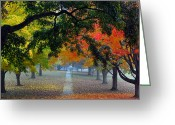 Tree Photo Greeting Cards - Autumn Canopy Greeting Card by Lisa  Phillips