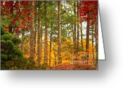 Yellow And Red Greeting Cards - Autumn Canvas Greeting Card by Carol Groenen