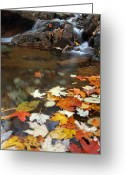 Photo Greeting Cards - Autumn Cascade Greeting Card by Juergen Roth