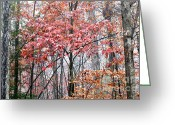 Williams Greeting Cards - Autumn Color Monongahela National Forest Greeting Card by Thomas R Fletcher