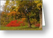 Ontario Mixed Media Greeting Cards - Autumn Colors 6591 Greeting Card by Maciej Froncisz