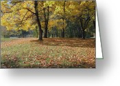 Quite Greeting Cards - Autumn colors and changing season in a park Oregon.  Greeting Card by Gino Rigucci