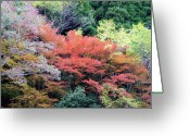 Tranquility Greeting Cards - Autumn Colors Greeting Card by Demerval Arruda, Jr.