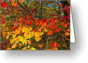 Autumn Colors Greeting Cards - Autumn Colors Greeting Card by H G Mielke