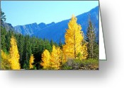 Turning Leaves Greeting Cards - Autumn Contrast Greeting Card by Wanda Jesfield