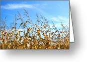 Cornfield Photo Greeting Cards - Autumn corn Greeting Card by Sandra Cunningham