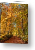 Country Lane Greeting Cards - Autumn Country Road Greeting Card by Matt Dobson