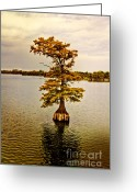 Cypress Tree Greeting Cards - Autumn Cypress Greeting Card by Scott Pellegrin