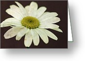 Floral Greeting Cards - Autumn Daisy Greeting Card by Lisa Knechtel