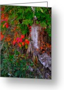 Indiana Autumn Greeting Cards - Autumn Exposed Greeting Card by Julie Dant