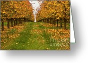 Sunbathing Trees Greeting Cards - Autumn Foliage Greeting Card by Heiko Koehrer-Wagner