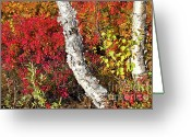 Sunbathing Trees Greeting Cards - Autumn Foliage in Finland Greeting Card by Heiko Koehrer-Wagner