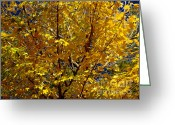 Bright Sky Pyrography Greeting Cards - Autumn Golden Leaves  Greeting Card by Mira Dimitrijevic
