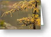 Baxter Park Greeting Cards - Autumn Grace Greeting Card by TB Sojka
