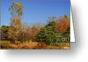 Changing Colors Greeting Cards - Autumn in Chicago Greeting Card by Julie Palencia
