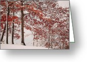 Elm Greeting Cards - Autumn in March Greeting Card by Robert Harmon